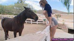 انها تقارن ديك الحبيب إلى الحصان